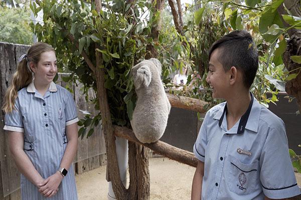 Students from St Joseph's Catholic Primary School Como with Baxter the Koala at Taronga Zoo