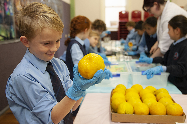 St Charles students test oranges as part of a STEM and sustainability project.