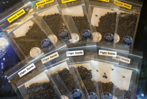 Space seeds from the What'll happen with the wattle??! project